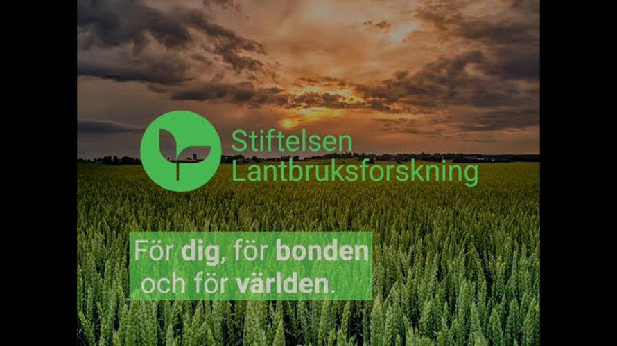 En film om forskning kring mjölk från Stiftelsen Lantbruksforskning.